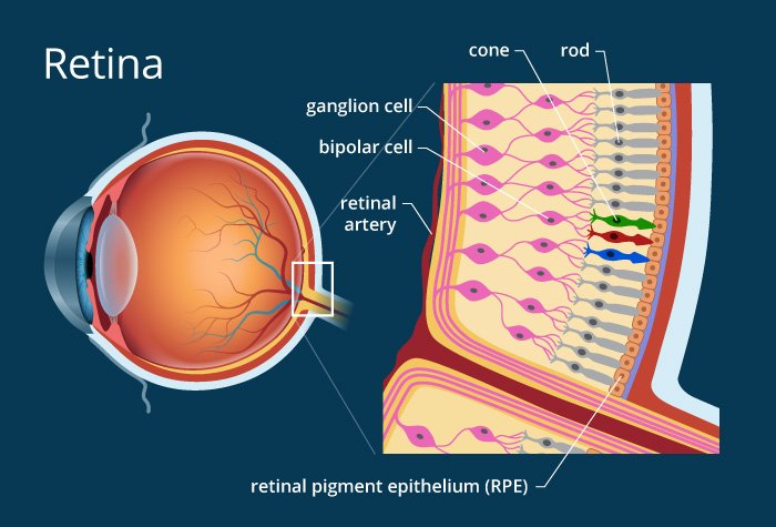 What is Retina ?